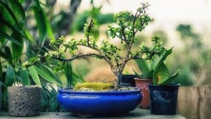 Our Best Bonsai Trees review